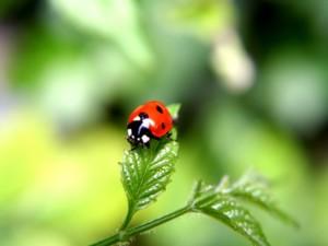 Влияние растений на окружающий мир