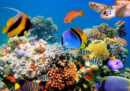 морская биология