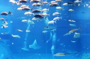 национальный научный центр морской биологии