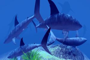 центр морской биологии