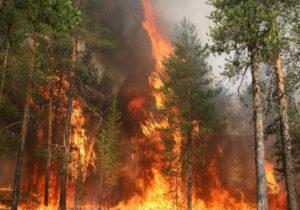 Новый метод предотвращения лесных пожаров