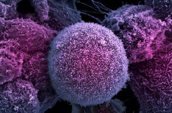 клеточная мембрана человека