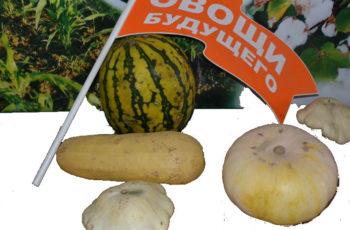 овощи будущего