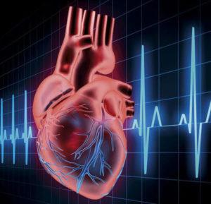 Как происходит передача электросигнала в сердце человека