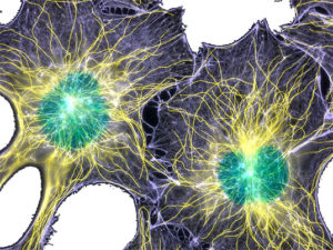 Темы молекулярной биологии