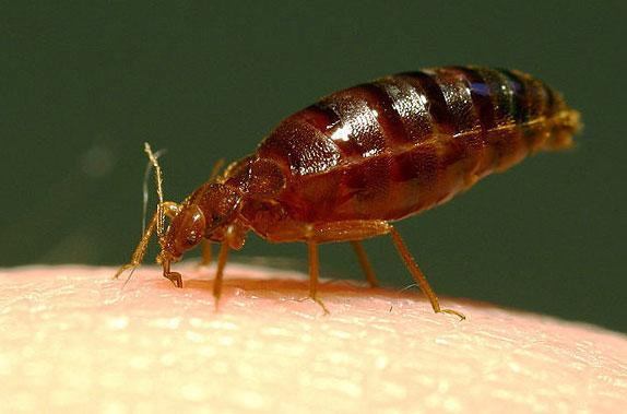 насекомые паразиты человека урок